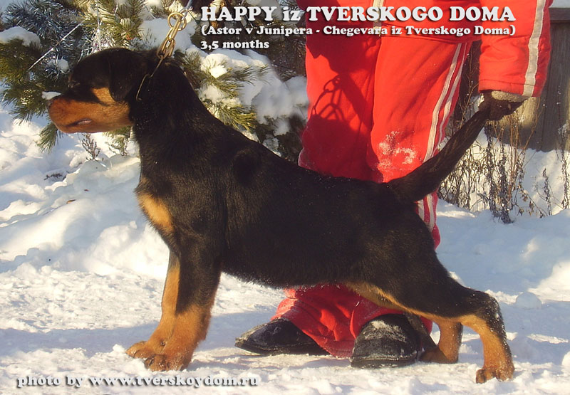 Happy iz Tverskogo Doma